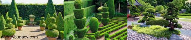 Формирование лиственных деревьев